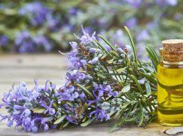 Rosemary Oil Good For Hair